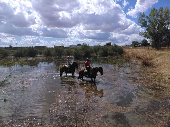 Rutas a caballo orilla del tajo  http://www.deportesyaventuraslaisla.com/rutas-a-caballo.html