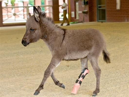 There's something really special about Emma, the miniature donkey. :)    See what it is by clicking the link:  http://www.godvine.com/read/emma-donkey-64.html