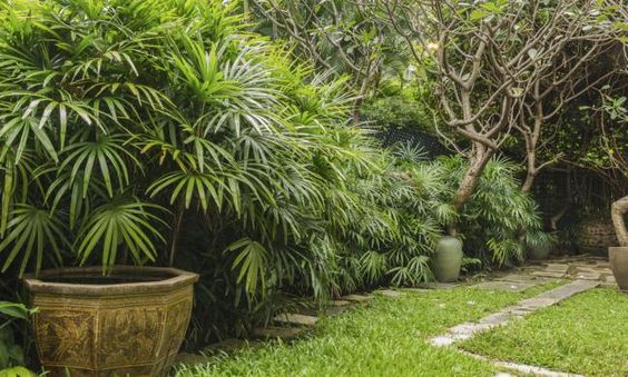 Rahis excelsa-Las mejores plantas para renovar la energía positiva en el hogar - IMujer