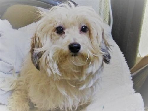 Adopt Ava On Dog Adoption Adoption Help Homeless Pets