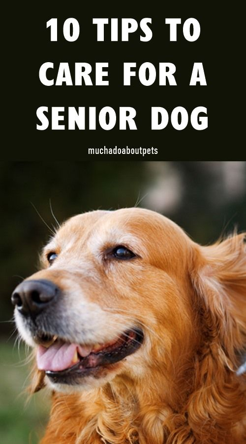 How To Care For A Senior Dog In 2020 Senior Dog Senior Dogs Care Dog Care