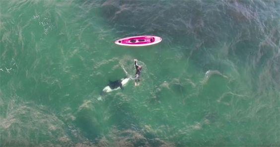 Kajakfahrer taucht mit gefährlichem Orka! #News #Unterhaltung