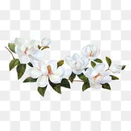 Flower Png Vector Psd And Clipart With Transparent Background For Free Download Pngtree Flower Illustration Flower Clipart Png Flower Clipart
