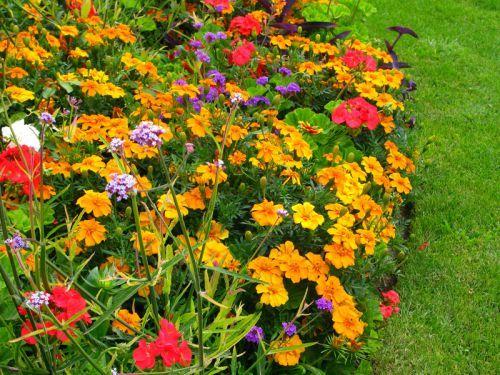 Comment Faire Durer Les Fleurs Au Jardin Jardins Comment Faire Un Jardin Fleurs