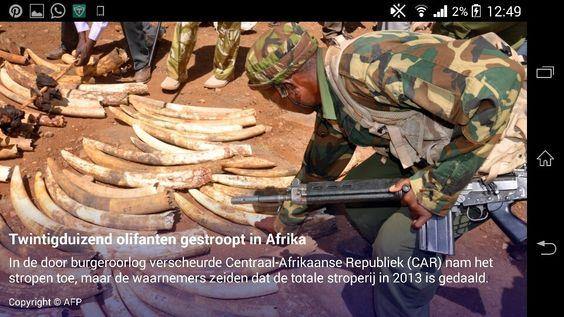 Vorig jaar zijn in heel Afrika meer dan twintigduizend olifanten ten prooi gevallen aan stropers. Dat hebben internationale waarnemers vrijdag gezegd.  SLIDESHOW Zij zien toe op het naleven van de Overeenkomst inzake de Internationale Handel in Bedreigde Soorten wilde dieren en planten (Cites).  Dat jaar werd in Afrika voor het eerst meer gesmokkeld ivoor in beslag genomen dan in Azië. 80 procent van de confiscaties vond plaats in Kenia, Tanzania en Uganda. In de door burgeroorlog…