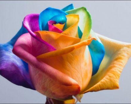 """قوس قزح أو قوس المطر كما يسميه البعض ليس مجرد ألوان، ليس مجرد ظاهرة طبيعية..  فكل لون يعبر عن حالة إنسانية أو نفسية نعيشها، عن لحظة نمر بها فنراها بلون ما  لكن!!!  عند اجتماع هذه الألوان ينتج لون النقاء.. لون الصفاء """"الأبيض"""" هنا يجب أن نتذكر أن تكون لحظاتنا والحالات التي نعيشها نقية صافية كاللون الذي نتج عن اجتماع ألوان قوس قزح."""