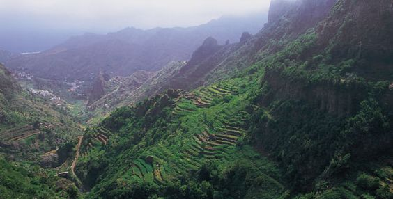 Una joya de la Naturaleza. Frondosos bosques formados por especies que ya han desaparecido en otros lugares del planeta pero que en esta isla han sobrevivido para tu deleite.