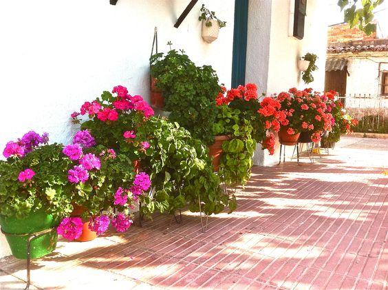 Flors a Santo Domingo