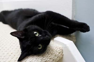 Top five names for black cats - Three Million Dogs