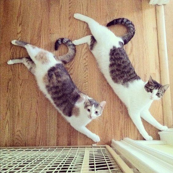 Sychronicity!