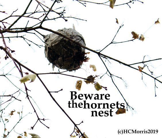 image of a hornets nest in a tree with words