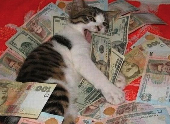 Gatos, cocaína y dinero: el mundo de Ca$hcats.biz | VICE