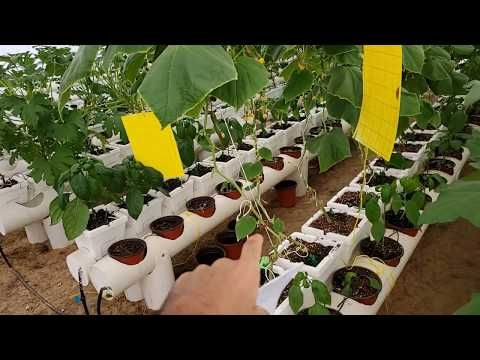 الزراعة المائية ٢ شرح مبسط ومختصر وجميل لبعض النقاط لازم تزرع وتنبسط Youtube Plants
