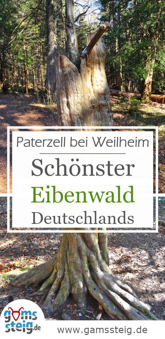 Paterzeller Eibenwald Und Zellsee Rundwanderung Bei Wessobrunn Wanderung Wald Eibe