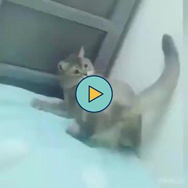 gatinho se divertindo com seu rabo