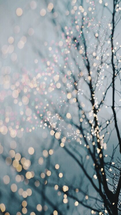 Christmas Iphone 5 5s 5c Wallpaper Fairy Lights In Trees Fine Art Landscape Winter Photography