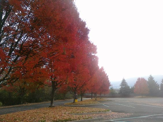 Video: The colors of Autumn. FYI, We used public domain pics from Wikimedia Commons and royalty free music from Incomputech.