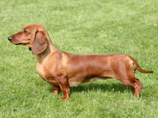 Pin On Doxies