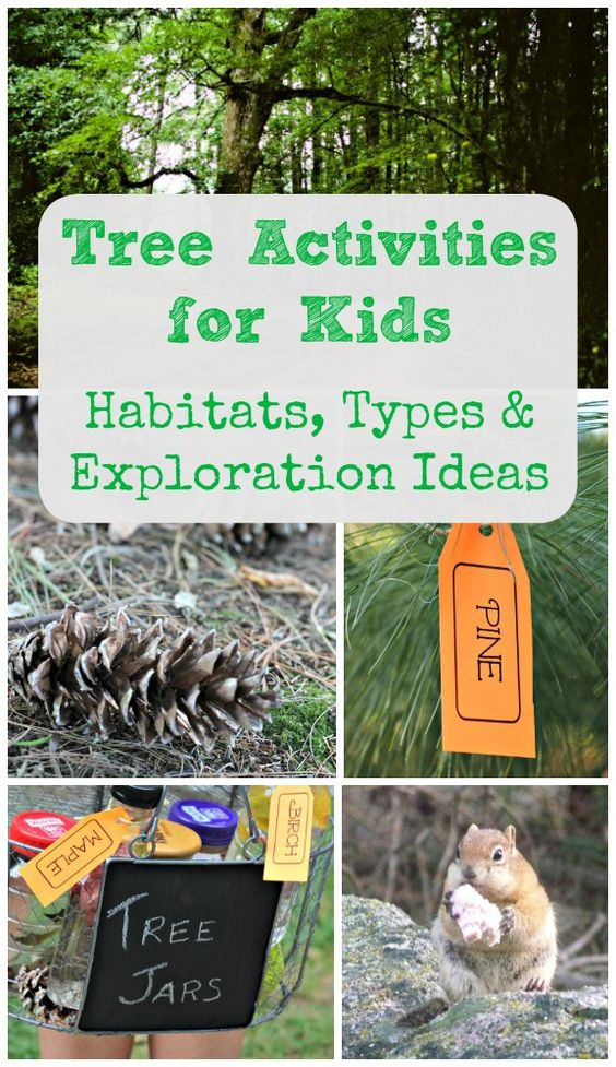 Tree Activities for Kids: Learn about Animal Habitats, Tree Types & Nature Facts with these great activities!