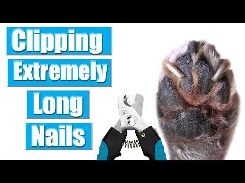 Wondering How To Best Trim Your Dog S Nails Look No Further The Tractive Blog Offers Everything You Need To Know For Your Dog Dog Paw Care Dog Nails Paw Care