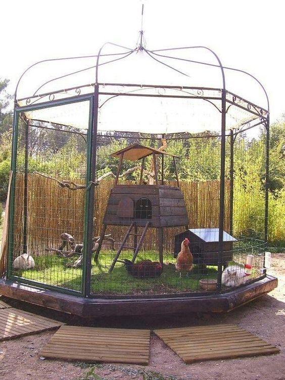 Chicken coops that you will go totally clucky over for Gazebo chicken coop
