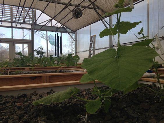 local florist builds aquaponic system