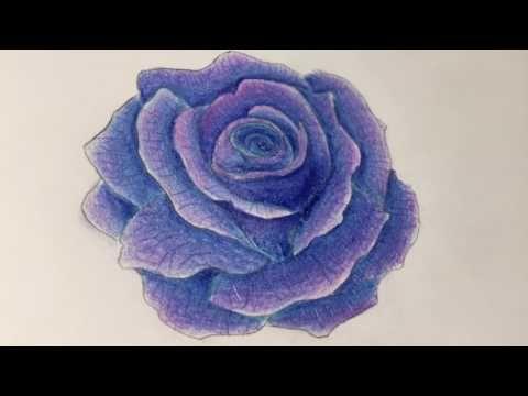 Purple Rose Color Pencils วาดดอกก หลาบส ไม Youtube