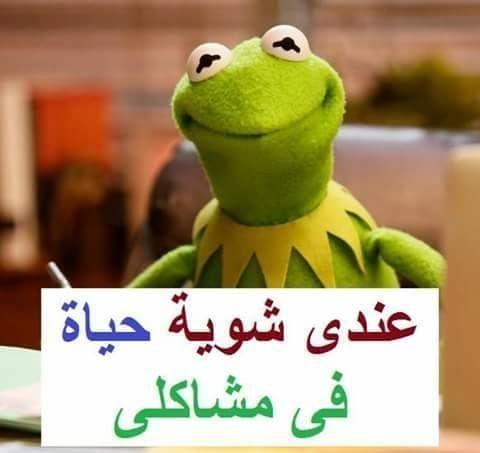 12 صورة نكت خلفيات رمزيات الضفدع كيرميت صورة 11 Funny Picture Jokes Fun Quotes Funny Arabic Funny