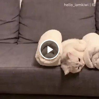 Como deixar seu gatinho quietinho no sofá