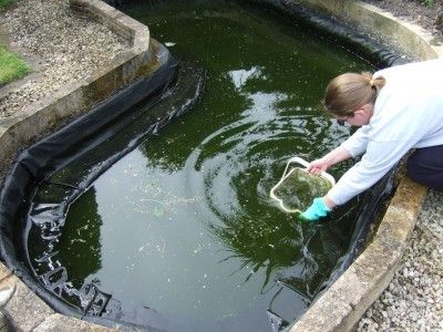 Gardens pond cleaning and the o 39 jays on pinterest for How to clean a fish pond