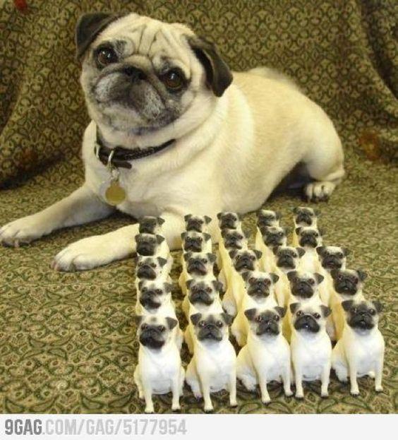 Pugsley And His Pug Army Pugs Funny Pug Memes Pugs