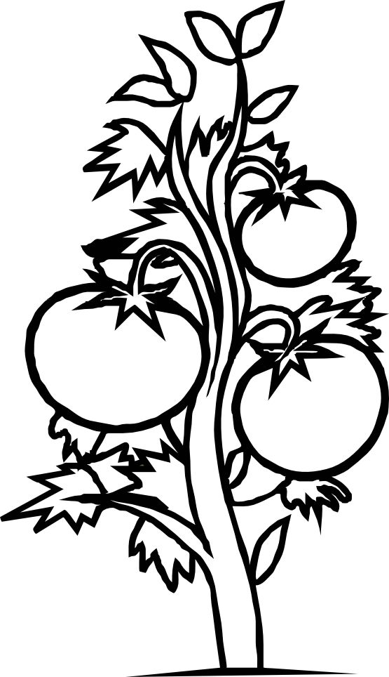 corn plant coloring pages - photo#29