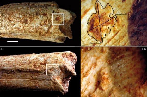 Homínido temprano ósea muestra la depredación por hienas