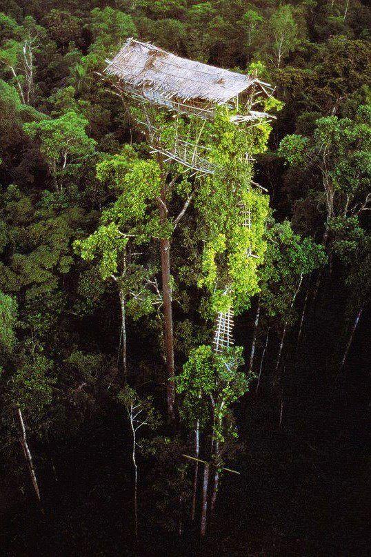 Baumhaus in den Tropen