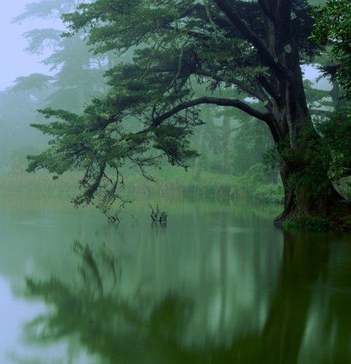 Reminds me of pocohantas state park  --- canoe trip heaven :)