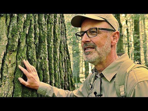 Das Geheime Leben Der Baume In 2020 Baum Leben Pflanzen