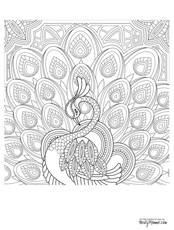 Peacock adult coloring page adult coloring pages for Peacock crafts for adults
