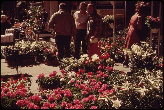 Spring Flowers Enliven Newbury Street, between Claredon and Dartmouth 1973 - Photographer: Halberstadt, Ernst, 1910-1987