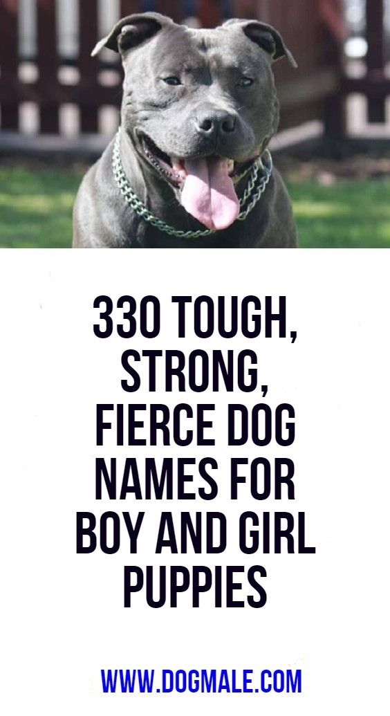 330 Tough Strong Fierce Dog Names For Boy And Girl Puppies Dog