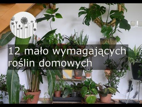 4 12 Malo Wymagajacych Latwych W Uprawie Roslin Domowych Rosliny Dla Poczatkujacych Youtube Plants House Plants Flowers