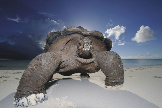 The Amazing World Of Turtles In Photography | One Big Photo: