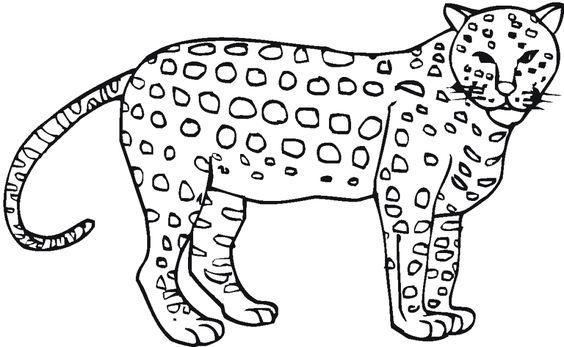 gepard ausmalbilder  ausmalbilder  pinterest