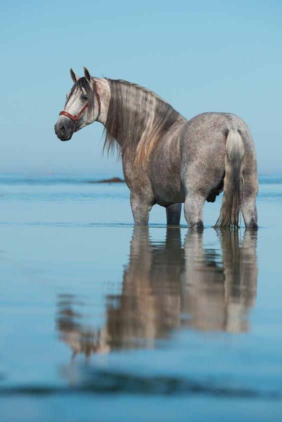 Pferdefotografie & Hundefotografie-Einzigartige Pferdefotos
