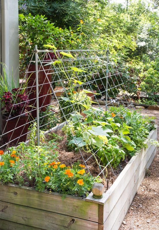 3 Ways To Use Cattle Panels In The Garden Small Gardens Garden