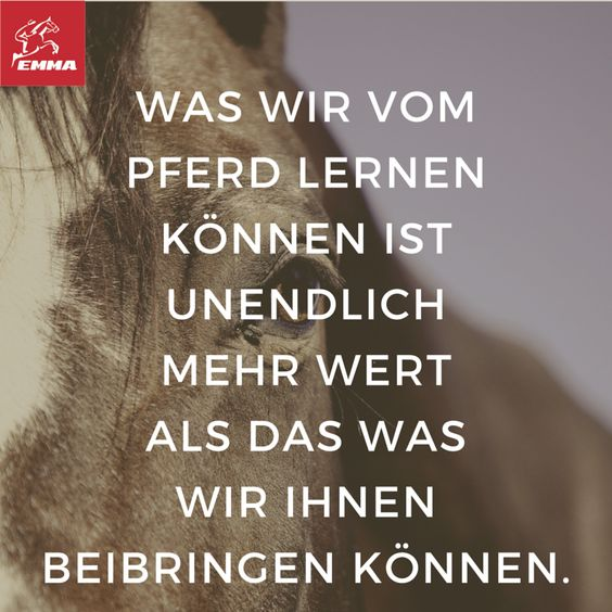 Pferdesprüche & Muskelaufbau Pferd-emma-pferdefuttershop.de21)
