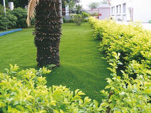 Công ty cỏ sân vườn Thảo Nguyên Xanh  http://www.thegioicosanvuon.net/