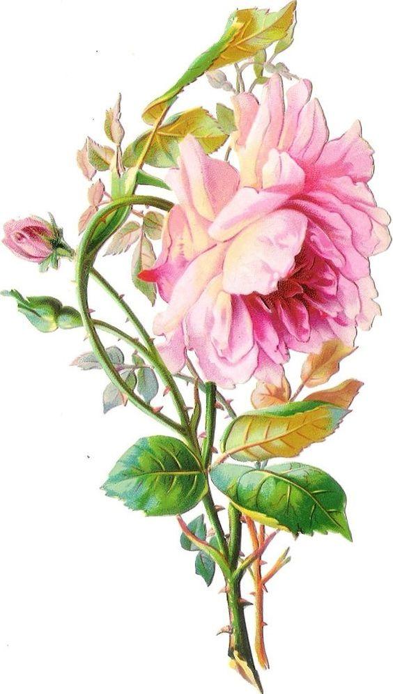 Oblaten Glanzbild scrap diecut chromo Rose  15,6cm Blume flower fleur: