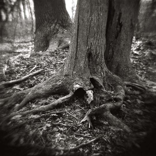 Untitled toy camera tree photography and film photography