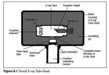 Tooth Morphology Basics - SlideShare