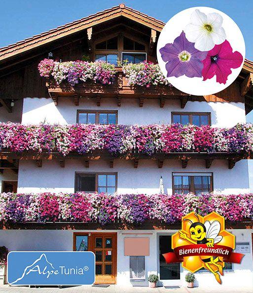 Hange Petunie Alpetunia Top Qualitat Petunien Blumen Im